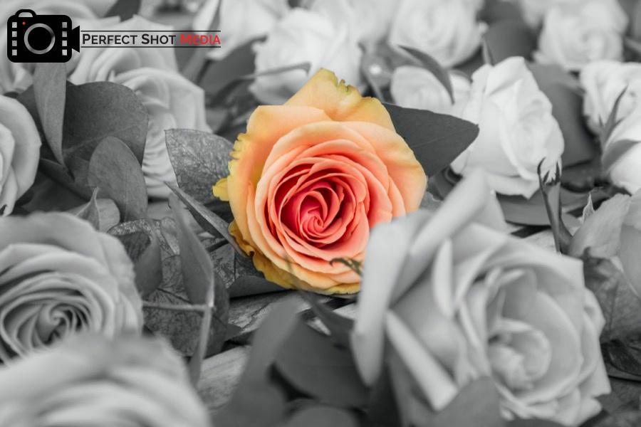 London Photographer - Perfect Shot Media - Florist photographer - photographer - flower photographer - plant photography - London based video production company - International video production company - London based Photographer - International photographer